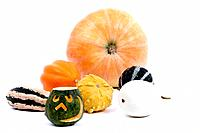 marrow, field pumpkin, ornamental pumpkin, halloween pumpkin