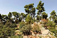 Israel the Upper Galilee The Citadel Garden in Safed