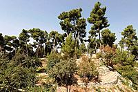 Israel the Upper Galilee The Citadel Garden in Safed