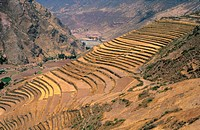 Pisac, Valle Sagrado, curved Inca terraces , Peru, South America