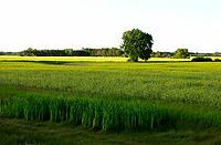 Prairie scene. Manitoba, Canada