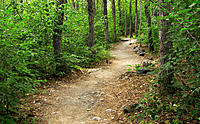 forest path, Alaska