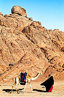 Bedouin woman walking with camel at Sinai desert. Egypt