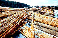 Pine trunks. Sawmill, wood industry. Jura. Franche-Comté, France