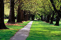 Hagley Park. Christchurch. New Zealand