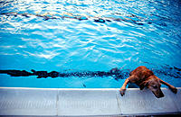 Dog getting out of swimming pool