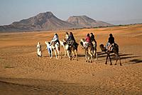 Tourists camel trekking in the Sahara desert, near Zagora, Morocco, north Africa