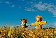 Scarecrow,Korea