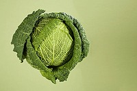 Cabbage (thumbnail)