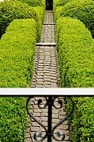 Garden path with boxwood hedges