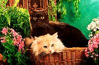 two cats in basket _ between flowers