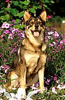 half breed dog _ sitting between flowers