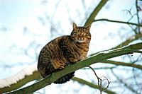 domestic cat _ sitting on branch