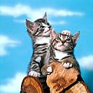 two young domestic cats on log