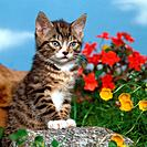 young domestic cat _ next to flowers