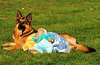 German Shepherd dog and baby