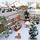 different plants on balcony _ winter