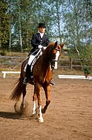 Dressage
