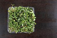 Sprouts in plastic container