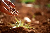 Man holding soil close_up of hand
