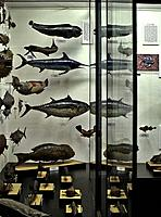 Fishes in show-case, National museum, Prague