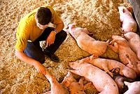 bio breeding of pigs