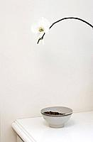 Detail of a white orchid over a dish of cat food