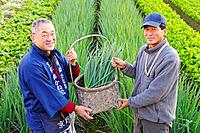 Farmers showing a basket with onionplant, smiling, portrait, Japan