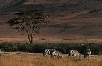 Ngorongoro Crater National Park, Tanzania.