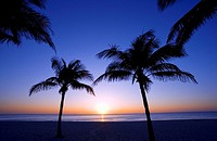 Silhouettes of palm trees on beach at sunrise