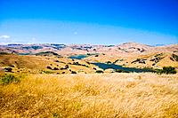 USA, California, Petaluma, organic cattle ranch