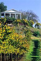 Vineyards at Benziger Family Winery, near Glen Ellen, Sonoma County, California