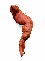 Sweet potato, Ipomoea batatas, is a tender, warm_weather vegetable that requires a long frost_free growing season to mature large, useful roots. It is...