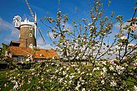 Cley Wimill and Blossom Norfolk April