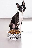 Boston terrier sitting in front of pet dish