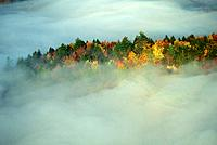 Autumn trees in mist
