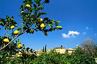 View on Village Biniaraix, Lemon gardens near Soller, Majorca, Baleares, Spain