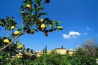 View on Village Biniaraix, Lemon gardens near Soller, Majorca, Baleares, Spain