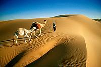 Caravan, camels, Sahara, Algeria, Africa