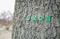 Grow letters on a tree trunk