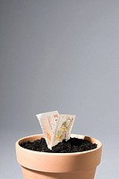 Ten pound note growing from pot