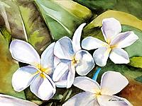 Plumeria II, Cluster of white plumeria flowers Watercolor painting.