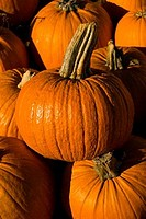 Close_up of harvested pumpkins