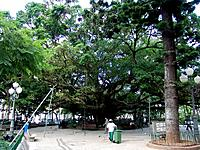 florianopolis people working in the park