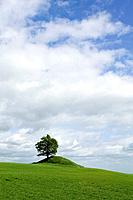 Tree on a hill