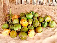sao luis do maranhao coconuts on sale in a rustic kiosk