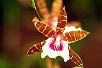 natural colorful plants orchids flowers