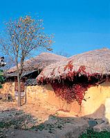 world ancient architecture, farmvilliage, fall, fence, tree, asia architecture, house