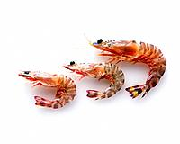Shrimps, high angle view