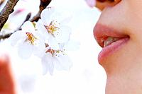 Woman smelling cherry flowers, side view, close up, Japan